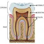 diente00